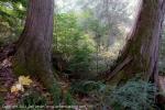 2011-10-08-5529-dsc_8438