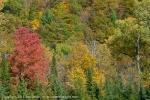 2011-10-08-5863-dsc_8802