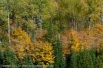 2011-10-08-5865-dsc_8805