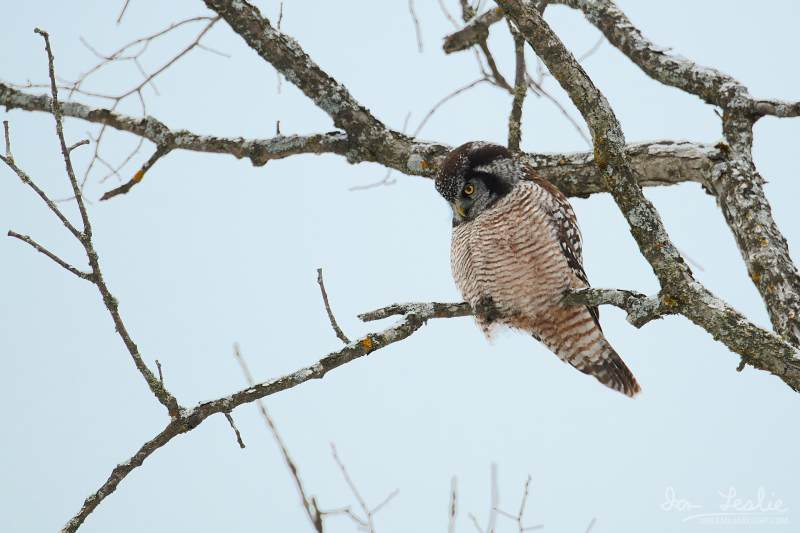 Captured at Old Almonte Rd and Dwyer Hill Rd on 2020-02-01 by Ian Leslie.